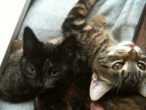 Cat feeding Northampton