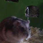 Small pet feeding Northampton